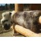 Originálne nefarbené ovčie kože ( multicolors )